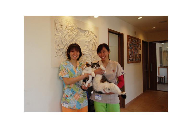 アジアンスタイル実例 クリニック「中川動物病院」