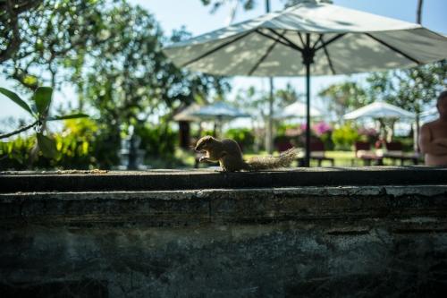 アジアン家具KAJAのインドネシアの風景