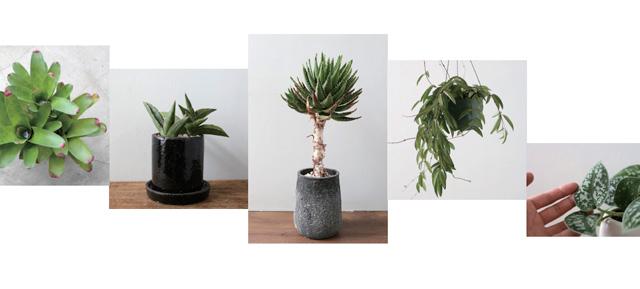 アジアン家具KAJA観葉植物