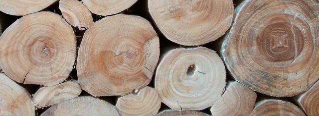 アジアンインテリアKAJA木の画像