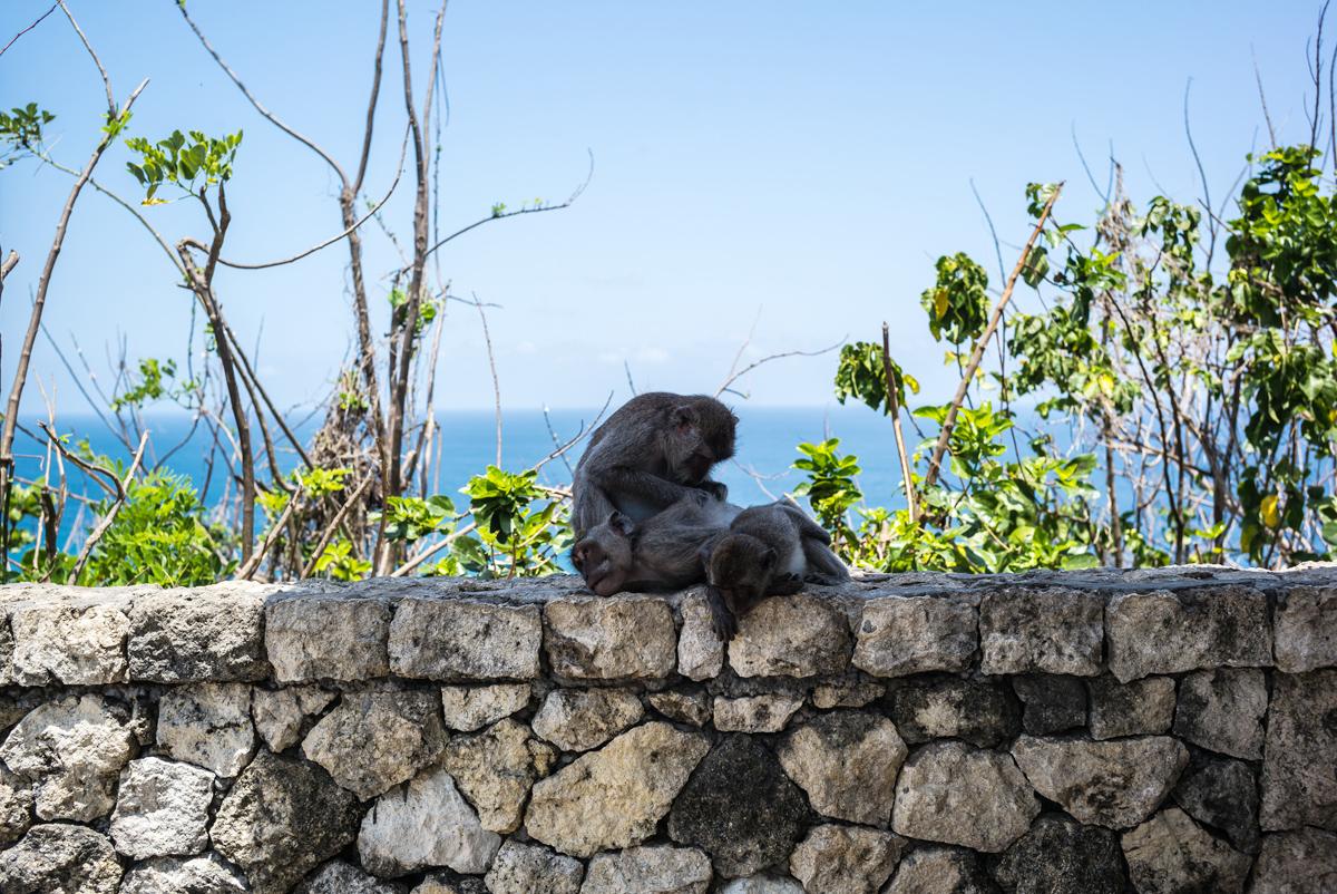 アジアン家具KAJAインドネシアの猿