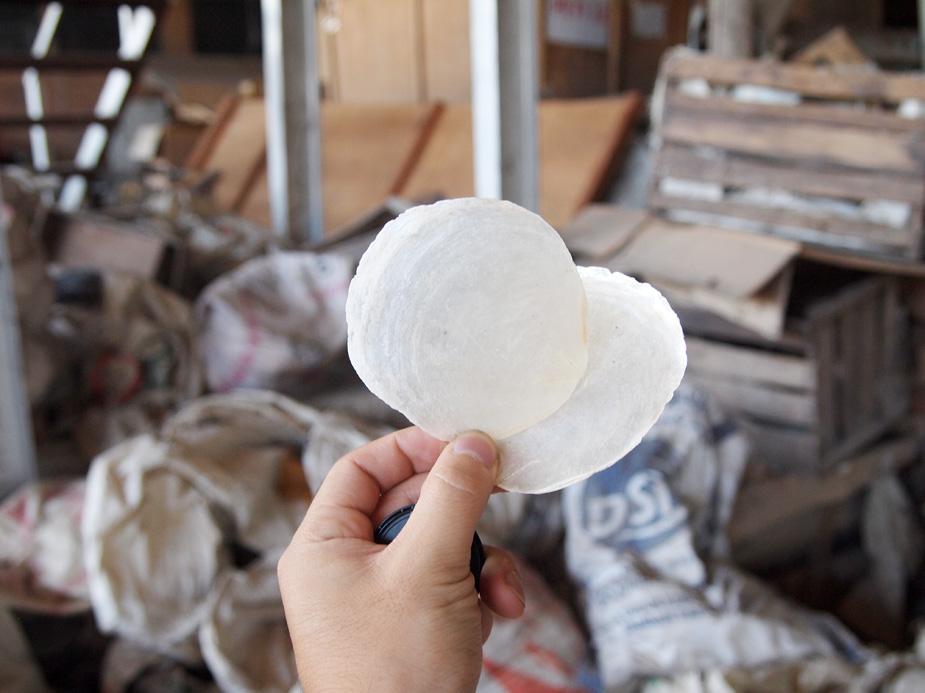 アジアン家具KAJAカピス貝の欠片