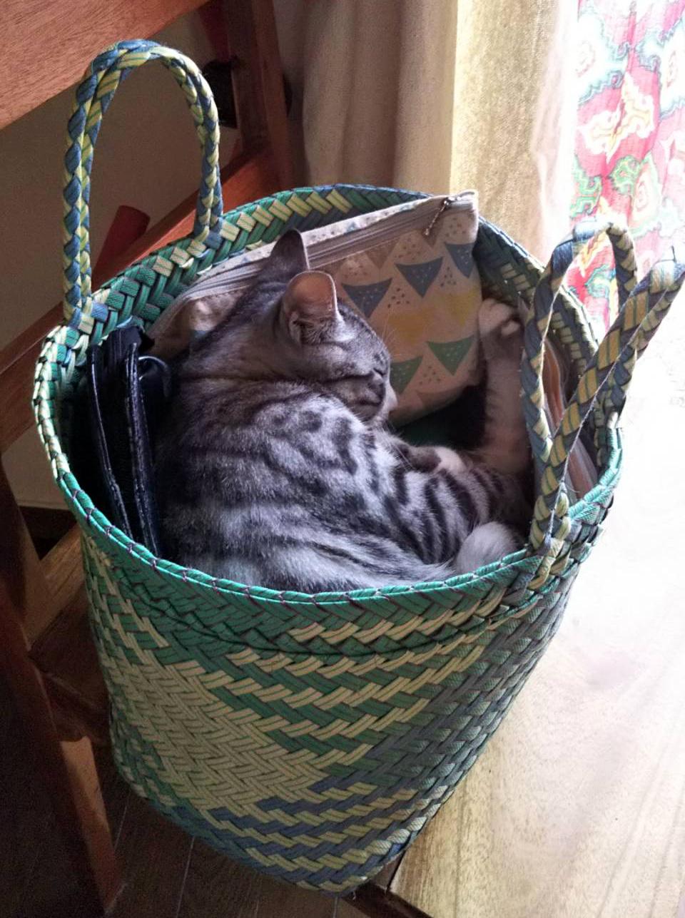 パサールバッグと猫