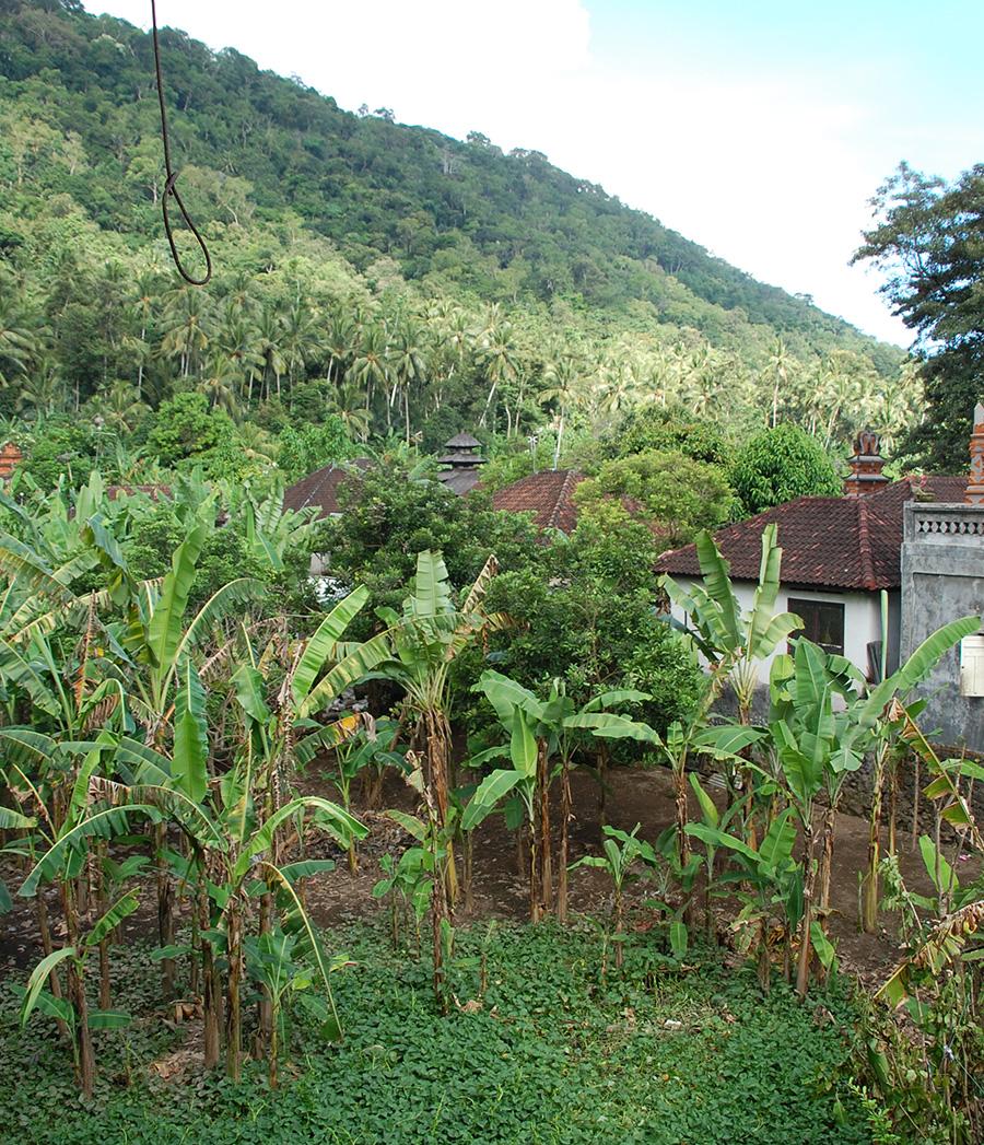 アジアン家具KAJAバリ島の自然の風景